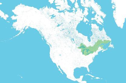 Great Lakes Century
