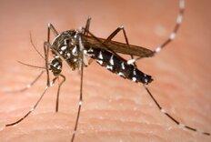 Pool Professionals Help in Fight Against Zika Virus