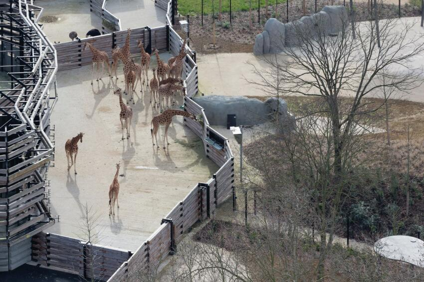 Aerial view of the giraffe habitat.