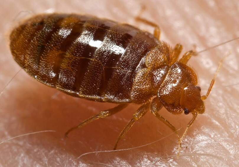 Top 25 Cities for Bedbug Infestations