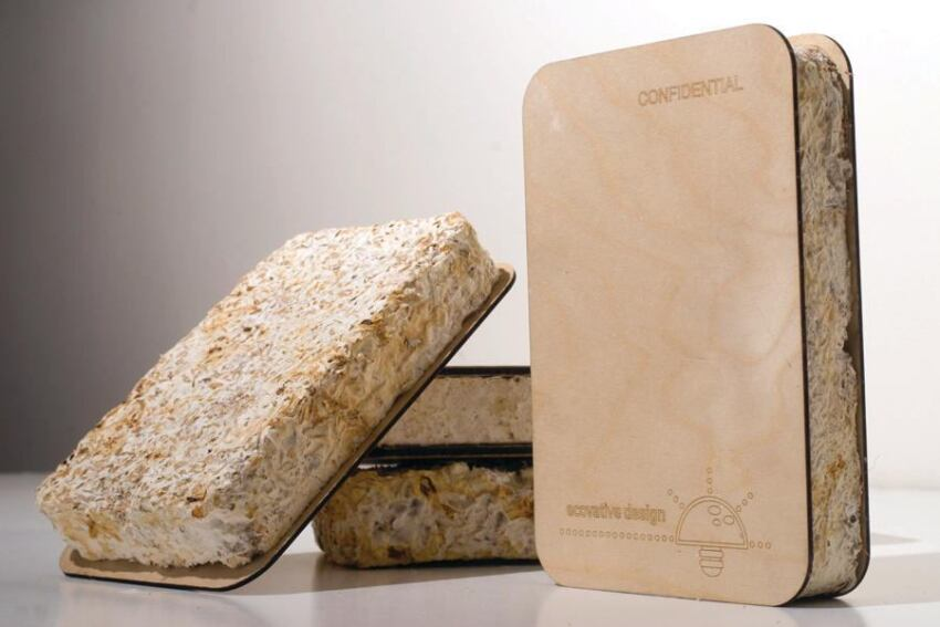 New York Startup Bonds Construction and Packaging Products With Mushrooms