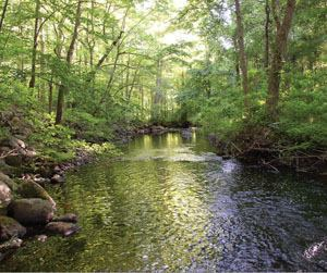 Tributaries and watershed characteristics have a dramatic impact on pond water quality. Shaded tributaries help to maintain cool water temperatures.
