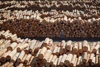 Canada, U.S. May Not Reach New Softwood Lumber Deal By Deadline