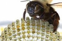 A Digital Camera that Mimics Insect Eyes