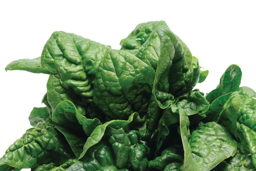 New Solar Technology: Spinach May One Day Help Energize Solar Panels