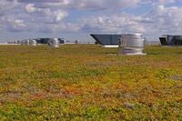 Product: Green Roof System from Xero Flor