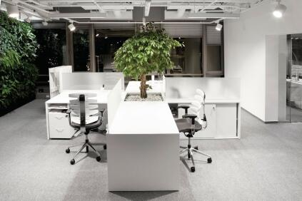 In the open-plan office, desks are set up in a cruciform pattern, with a ficus tree planted at the center.