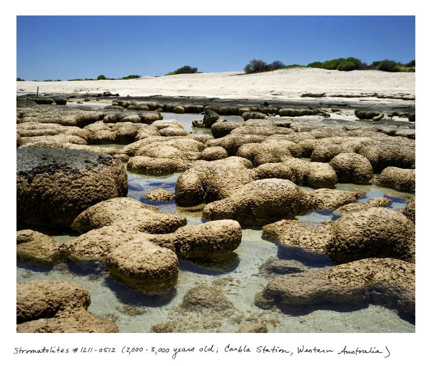 In The Oldest Living Things in the World (University of Chicago Press, 2014), Rachel Sussman scoured the world for living organisms that were more than 2,000 years old. She found these stromatolites in Carbla Station, Australia.