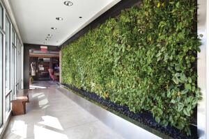 Living wall systems, like this one in a Minneapolis apartment building, are growing in popularity.