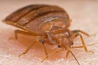 Cross-Sector Webinar Probes Bedbug Mitigation, Litigation