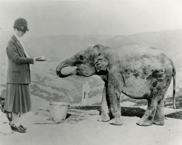 Julia Morgan with Marianne the elephant, 1929.