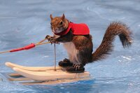 Watch Twiggy, the Water-Skiing Squirrel, Teach Kids About Water Safety