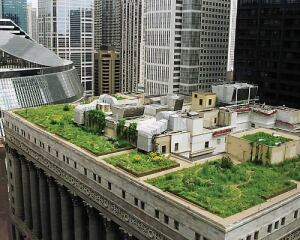 Inspired by a European trip, former Chicago mayor Richard Daley sought to turn the Windy City into the greenest on earth, with the ambitious goal of having 6,000 green rooftops by 2020.