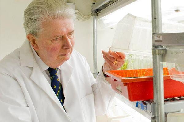 Professor Edward Cocking tests plants modified to fix nitrogen from the air.