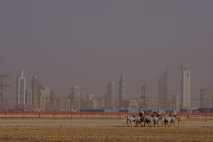 Arabian Heights