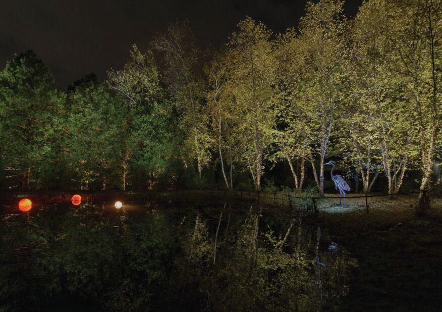 To the far right of the pond, the grove of Birch (Betula) trees were uplit and downlit with a combination of LED and halogen sources. The night orbs in the pond add a final accent of color to the overall composition.