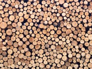 Cut lumber for processing