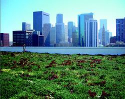 The modular green roof on the U.S. EPA's new facility in Denver allows sections  to be installed or quickly removed if repair crews need easy access.