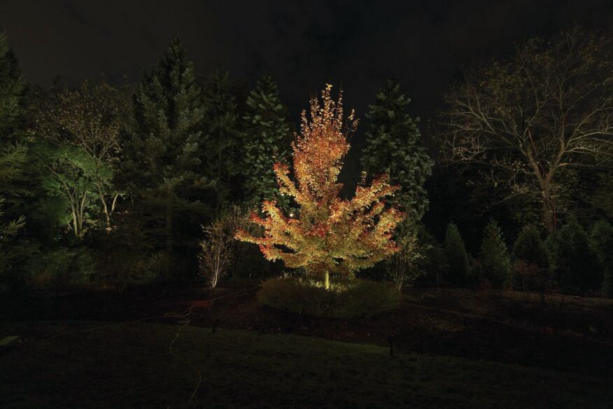The Group 1 team selected the young maple tree (Acer rubrum 'Brandywine'), which was planted on the actual burn pile site, as the main focal point. A series of integrated LED floodlights, staked in the ground, were used to uplight the tree and draw out the red tone of the leaves. A trio of Spruce (Picea) in the background was lit with a secondary layer of light to provide an appropriate backdrop.