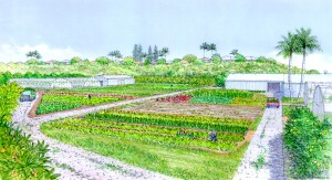 A concept illustration of Ho'opili's agricultural space, which will cover 200 acres of the 1,600 acre property.