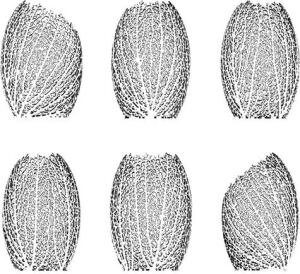 Drawing illustration of Hyphae lamp variationsThe form and pattern of the Hyphae lamp mimics the internal veining structure of a leaf as it combines the architectural and mathematical interests of its designers—Jessica Rosenkrantz and Jesse Louis-Rosenberg. Using a custom-calibrated algorithm, they re-create a natural phenomenon and create truly one-of-a-kind fixture designs.