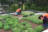 graze the roof