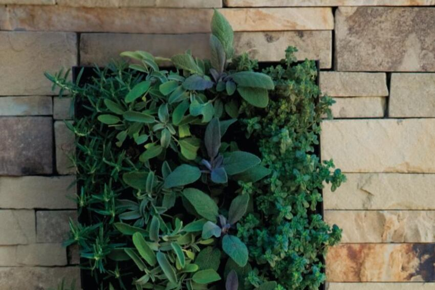 BrightGreen Living Wall Planter