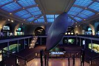 Show & Tell: Museum Lighting