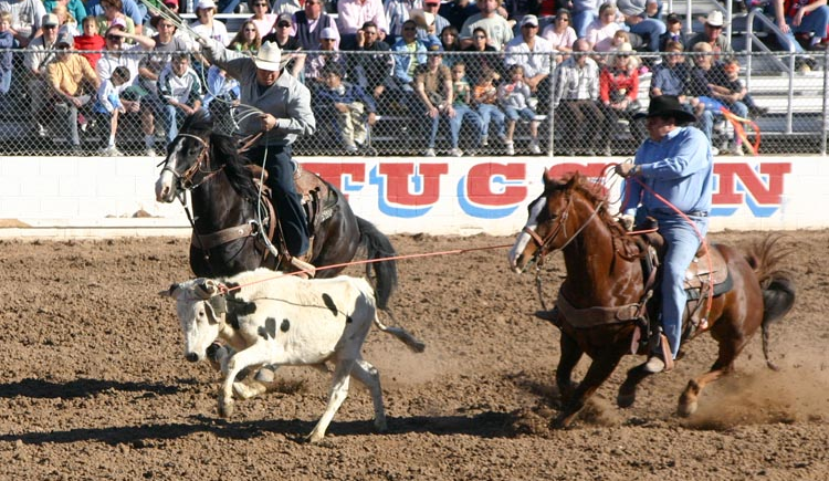 Example of Team Roping competition in a rodeo