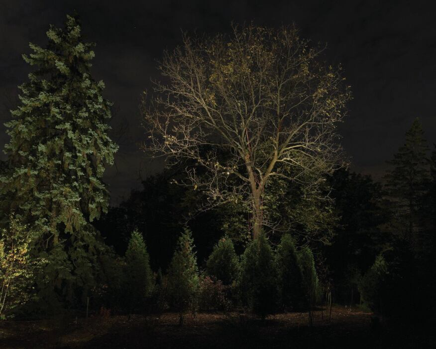 On the right-hand side of the site, a large Black Walnut (Juglans nigra) tree—which was actually just over the fence on the neighboring property—was key to filling out the scene. With permission from these neighbors, the tree was lit using a mix of LED and halogen sources and included four uplights to highlight the tree canopy and branching structure and three downlights to highlight the tops of the hedge of Western Cedar (Thuja plicata) below.