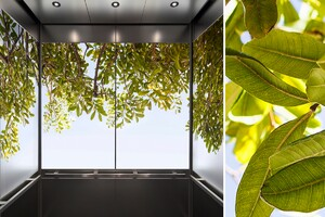Bringing the Outdoors Into Interior Spaces