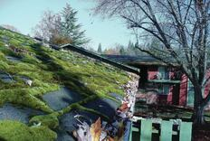 Damage From Roof Moss