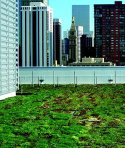 The U.S. Environmental Protection Agency installed a green roof this past March  on its Denver headquarters. Photos: Green Grid Green Roofs