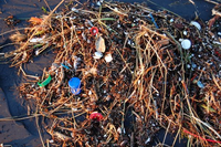 Researchers Find Microbes That Degrade Plastic Waste