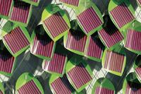 Product: SMIT Solar Ivy