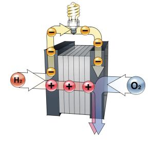 How It Works: 1) Hydrogen fuel enters the anode end of the fuel cell, where the atoms' protons and electrons split and travel separate paths to the cathode on the other side of the fuel cell. 2) As the hydrogen electrons travel on their separate path, they generate electric current; meanwhile, the protons travel through an electrolyte to reach the cathode end. 3) In the cathode, electrons rejoin the hydrogen protons and combine with oxygen to create water. 4) Water and heat exhaust from the fuel cell.Source: Fuel Cells 2000, The U.S. Fuel Cell Council, and Nuvera Fuel Cells