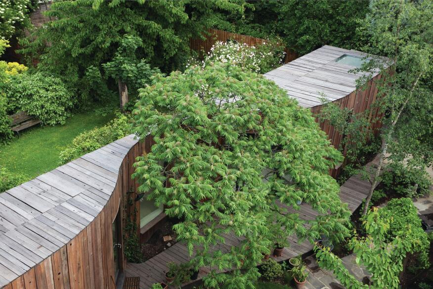 Driven by a mandate to preserve an old-growth sumac tree in the rear garden, the architects created a curved reclaimed timber-clad addition that left the root structure undisturbed.