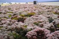 financial incentives in new stimulus bill could spur green roof installations