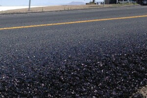 As oil prices fall, cost of asphalt is on the rise