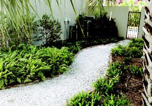 Here, fishtail fern (left) contrasts with the smaller, fragrant wart fern (right), along a path covered in washed shells. At night, the shells reflect moonlight and provide a crunchy sound underfoot for security.