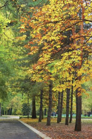 multicolored trees at autumn avenue in the park