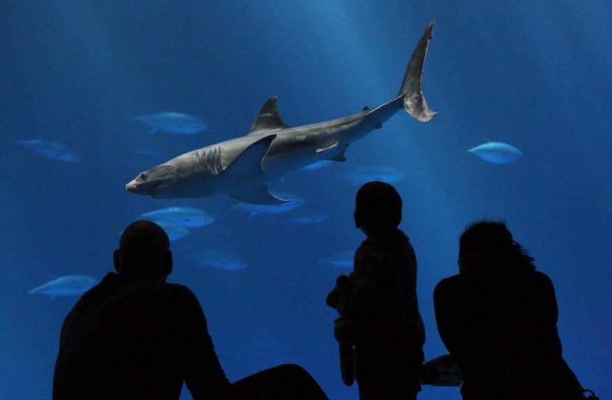 Open Sea exhibit at the Monterey Bay Aquarium in Monterey, Calif.