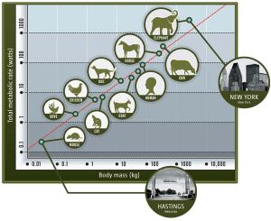 "The metabolic efficiency of animals is directly proportional to body mass. Cities are the same. Consider New York as the elephant. The number of people on one square mile in Manhattan is 2.5 times the entire population in Hastings, Neb. Hastings was recently named ""the greenest city in America,"" but, compared with New York, its efficiency is akin to that of a mouse."