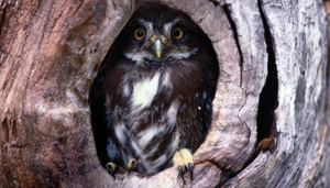 BUILDERS 1, OWLS 0: Builders rejoiced following a U.S. Supreme Court ruling that removed the EPA  from Clean Water Act permitting in Arizona.