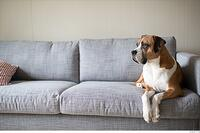 Top 25 Pet-Friendly Rental Markets
