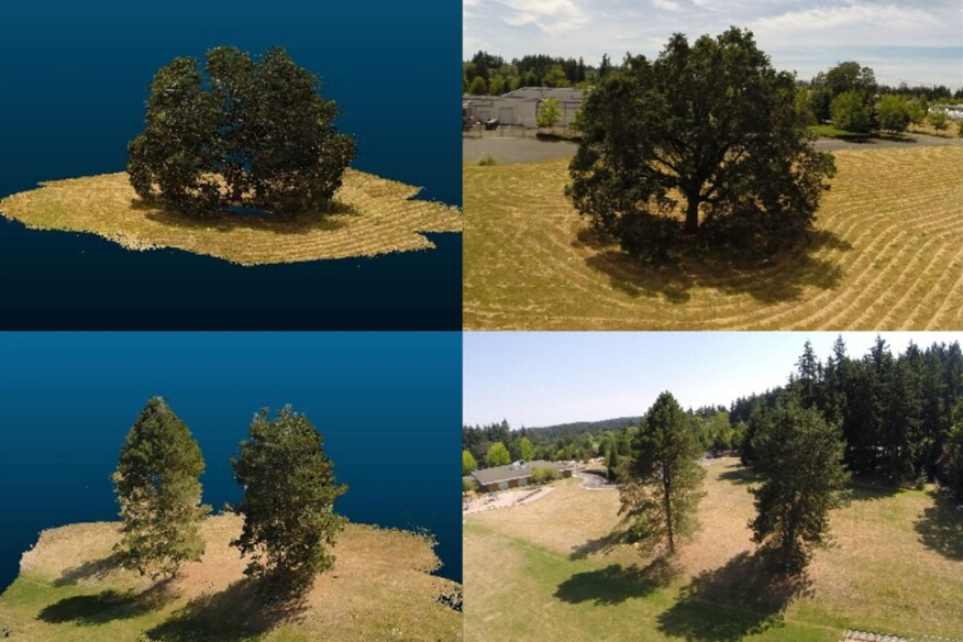 Real trees (right) and their simulation in Washington State University's new cyberforest program (left).