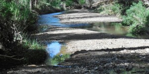 San Pedro River Downstream near San Pedro House