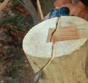Figure 10. To shed water, the tops of the posts are beveled after the pockets for the beams are cut.