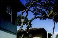 Bougainvillea Courtyard Homes