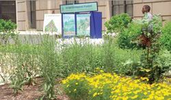 Bioretention cells and raingardens in the U.S. EPA's Ariel Rios South Courtyard  will help provide more than 400 cubic feet of stormwater storage volume. Photo: U.S. EPA
